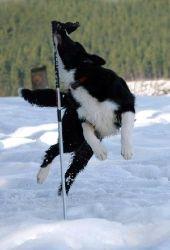 Hundeurlaub im Sauerland